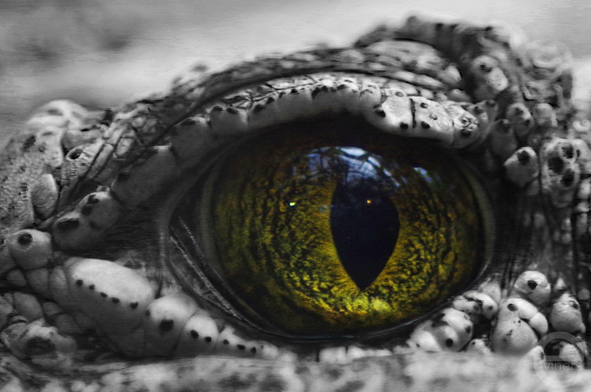 Eye of a Crocodile
